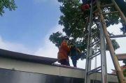 Pria Paruh Baya Ditemukan Pingsan di Puncak Pohon Pulogadung