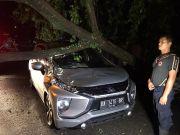 Mitsubishi Xpander Tertimpa Pohon Roboh Saat Angin Kencang di Padang