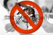 76 Warga Bandung Barat Terjangkit Chikungunya, Waspadai Nyamuk Aedes Albopictus