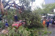 Pohon Tumbang Menimpa Sejumlah Kendaraan, Tak Ada Korban Jiwa