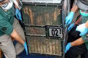 Disita di Thailand, 2 Orangutan Sumatera Dikembalikan ke Jambi