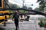 Diguyur Hujan, Pohon Besar di Jalan Raya Siliwangi Tumbang