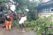 3 Rumah dan Gazebo Rujab Bupati Pangkep Rusak Tertimpa Pohon