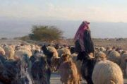 Cerita Ajaran: Domba dan Dompet