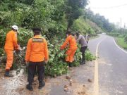 Pohon Tumbang dan Tanah Longsor di Minahasa Selatan, Pengguna Jalan Diminta Hati-hati