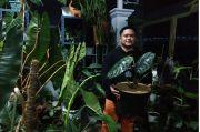 Booming Tanaman Hias, Sehari Warga Depok Ini Bisa Dapat Cuan Puluhan Juta Rupiah