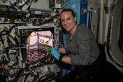 Astronot NASA Berhasil Memanen Lobak yang Ditanam di Luar Angkasa
