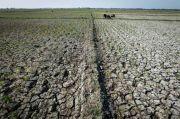 Mentan: Waspadai Iklim Ekstrem di 2021