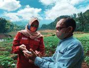 Dukung Ketahanan Pangan, BNI Uji Coba Smartfarming di 5 Provinsi
