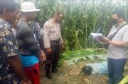 Seharian Tak Pulang, IRT di Simalungun Ditemukan Tewas di Ladang Jagung