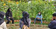 Belajar Urban Farming dan Magang Seru di Kebun Edukasi Sarah Prabumulih