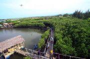 Pemerintah Tegaskan Komitmennya untuk Pemulihan dan Perlindungan Mangrove