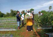 PHE WMO Ubah Lahan Tandus Jadi Lahan Subur Penghasil Tanaman Hortikultura
