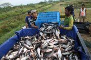 Budidaya Kian Efisien, Struktur Ekonomi Pembudidaya Ikan Membaik