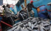Kadin: Ini Moment Terbaik Pacu Produk Sektor Perikanan