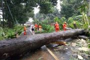 Cuaca Ekstrem, 2 Pohon Tumbang di Minahasa Utara Timpa Kendaraan Dinas