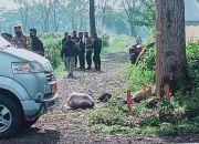 Subang Gempar, Ada Jasad Anak Perempuan 7 Tahun Terbungkus Kardus Mi Instan di Kebun Teh