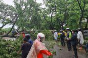Hujan Deras Disertai Angin Kencang di Gowa, 2 Pohon Tumbang