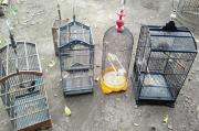 Curi Lima Ekor Burung dan Sangkarnya, Pria Ini Diamankan Polisi