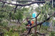 Puluhan Pohon Tumbang di Maros Akibat Hujan Disertai Angin Kencang