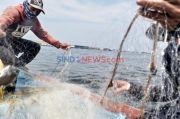KKP Terapkan Larangan Penjualan 20 Jenis Ikan, Ini Rinciannya