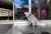 Anjing di Turki Ini Kunjungi RS Setiap Hari untuk Tunggui Tuannya yang Sakit