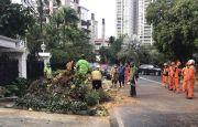 Hujan Deras Guyur Jakarta Selatan, Motor Ojol Ringsek Tertimpa Pohon Tumbang