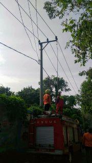 Ular Sanca Kembang Terjebak di Kabel Listrik, Petugas Damkar Turun Tangan