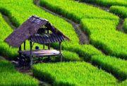 Begini Islam dalam Menyikapi Masalah Pertanian dan Pengobatan