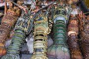 Pola Cangkang Lobster Menginspirasi Ilmuwan Membuat Beton Lebih Kuat
