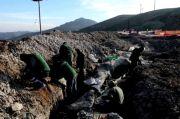 Fosil Pohon Berusia 20 Juta Tahun Ditemukan di Hutan Lesbos Yunani
