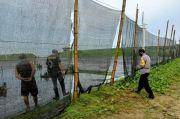 Pengusaha Tambak di Wilayah Cikeusik Banten Mengeluh Sering Terjadinya Dugaan Perampokan