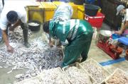 2012 Dibuka Jokowi, Pasar Ikan Balekambang Kembali Diaktifkan