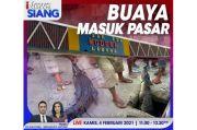 iNews Siang Live di iNews dan RCTI+Kamis Pukul 11.00: Buaya Masuk Pasar
