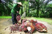 Saat yang Lain Kewalahan, Industri Sawit Bertahan di Tengah Pandemi