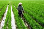 Selama Januari 2021, Daya Beli Petani Jawa Timur Menurun