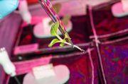 Astronaut Sukses Melakukan Transplantasi Tanaman Pertama di Luar Angkasa