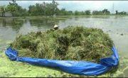 Tanaman Padi Terendam Banjir Sungai Avur, Petani di Tuban Panen Dini