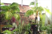 Bonsai Pohon Kelapa, Cantik dan Banyak Diburu Pecinta Tanaman Hias
