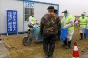 Virus Flu Babi Serang Petenakan di China, Peneliti Temukan Fakta Ini