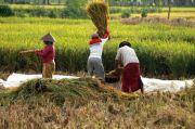 Kinerja Sektor Pertanian Menghijau Ketika Pertumbuhan Ekonomi Merah