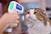 Korsel Luncurkan Tes COVID-19 untuk Kucing dan Anjing