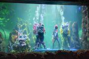 Rayakan Imlek 2572, Ancol Terjunkan 7 Penyelam Atraksi Barongsai di Air