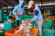 Dampak Cuaca Buruk, Harga Ikan Laut di Lamongan Naik