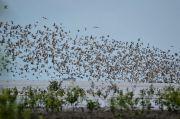 Kenapa Migrasi Burung Tidak Pernah Tersasar, Ini Penjelasannya