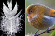 Burung Dataran Tinggi Berevolusi untuk Perlindungan dari Dingin Ekstrem