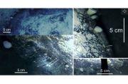 Es Antartika Sembunyikan Dunia Ajaib Tempat Makhluk Aneh Berkembang Biak