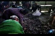 Truk Bermuatan Lele Terguling di Serpong, Warga Rebutan Bawa Pulang