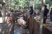 Tambang Pasir Ilegal dan Ternak Babi di Kawasan KKOP Hang Nadim Ditertibkan