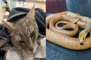 Kucing Ini Mati Korbankan Diri demi Selamatkan Pemiliknya dari Ular Berbisa